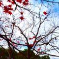 木枯らしという季語が表す季節!意味や由来を徹底的に解説してみた